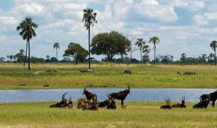 Animals-Zimbabwe