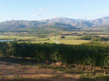 Wine Farm 2