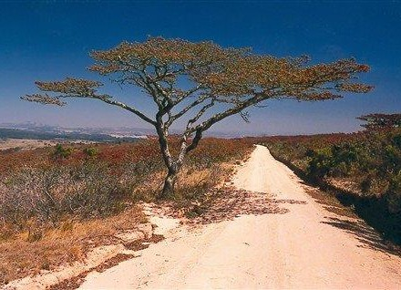 Trees of Zimbabwe 2